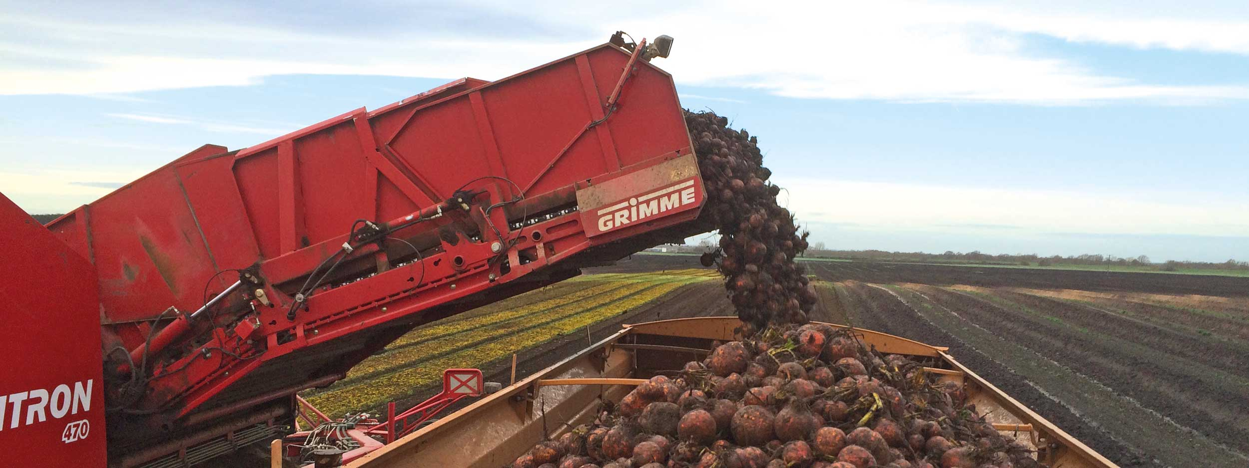 Stan White Farms family business supply all the beetroot bottling, vac pac and fresh markets in the United Kingdom and Europe
