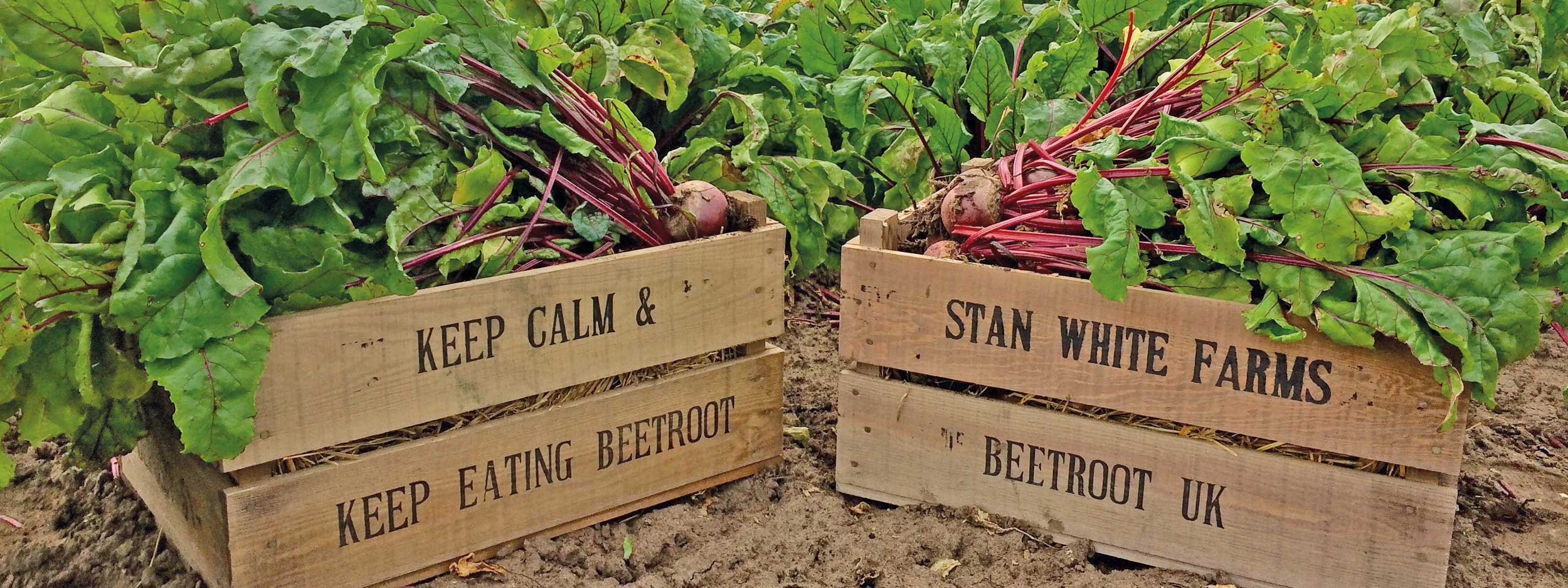 one of Britains largest beetroot suppliers in the UK