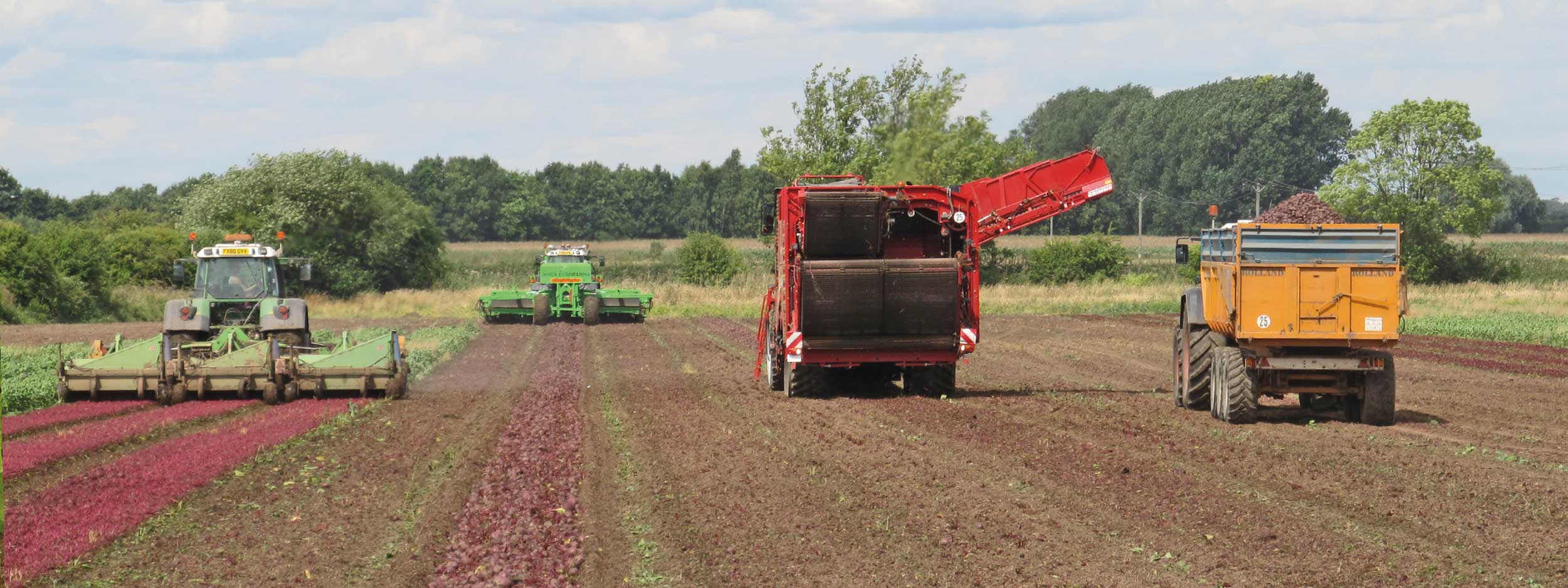 grower and supplier of quality beetroot in Nottinghamshire, England, UK